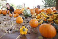 Pumpkin_sales_tt_101415_1