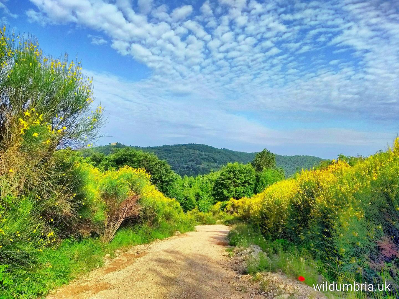 The road to Wild Umbria.