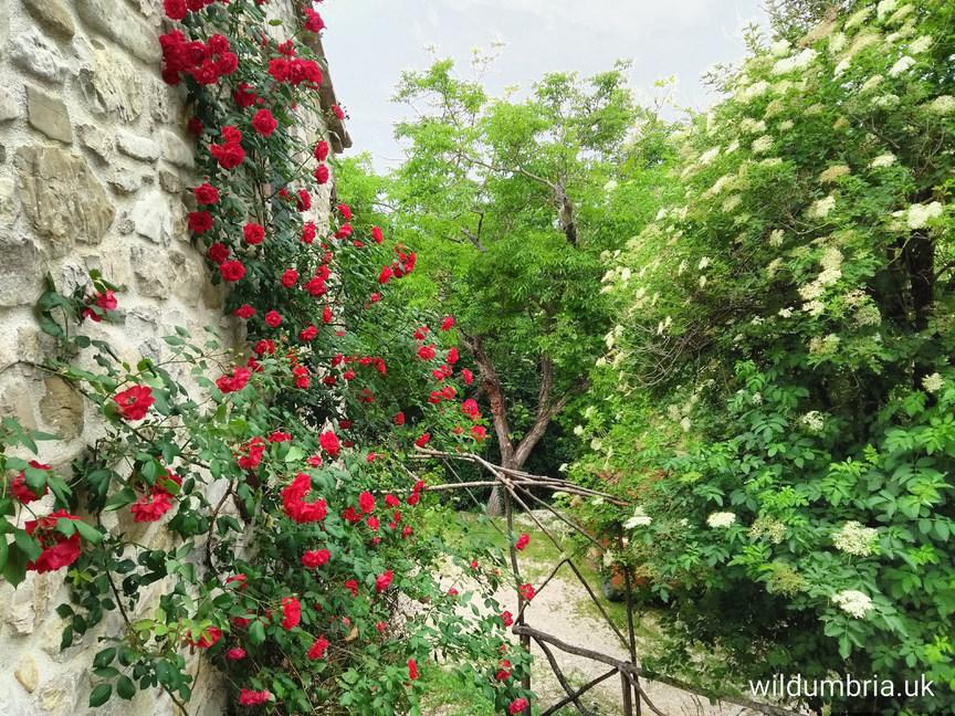 Roses around the door.