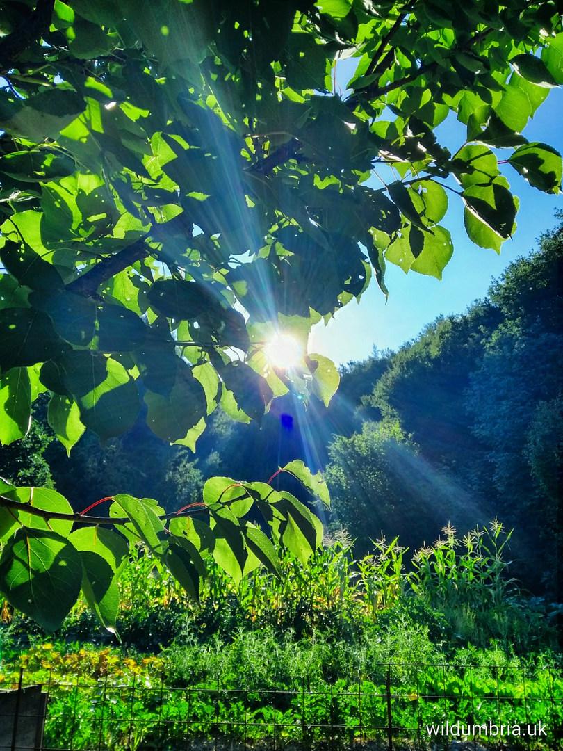 Summer sunrise over the garden.