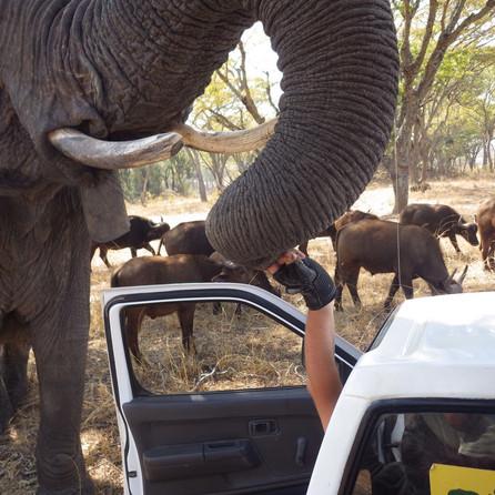 grippit elephant