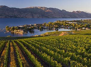 Kelowna Winery Pic.jpg