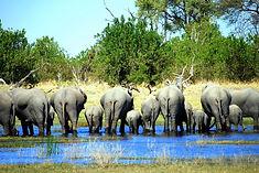Virtuoso Elephants.jpg