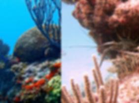 Isla Mujeres reef dive sites