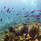 Manchones Reef.jpg