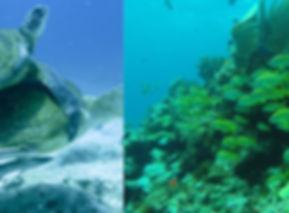 Drift dives around Isla Mujeres