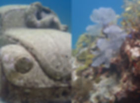 MUSA beatle and Manchones reef