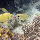 Fish greeting in Manchones