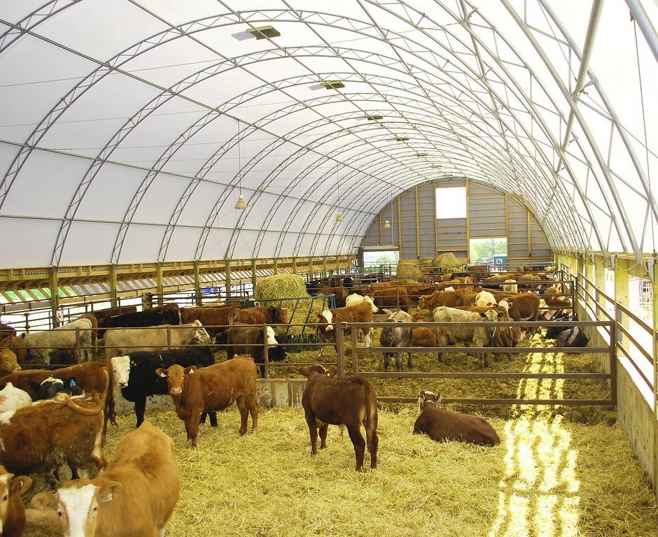 Cattle Building.jpg