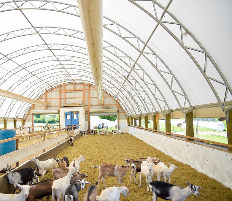 CC series 52x80 Ag Livestock Inside.png