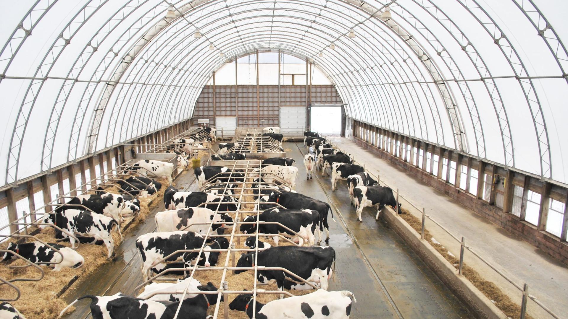Dairy Building 2.jpg
