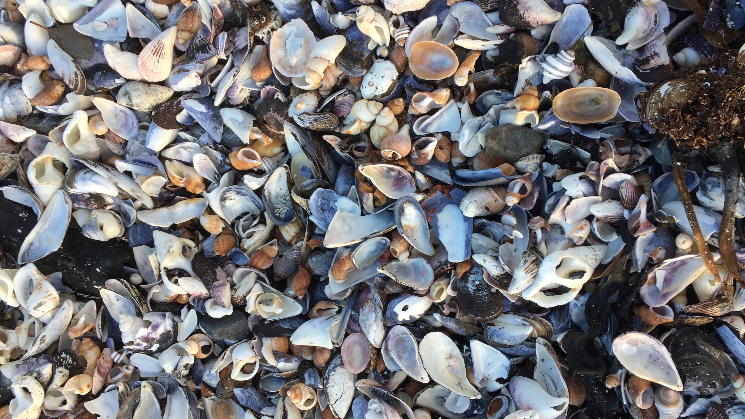 Piles of Beautiful Perfect Shells