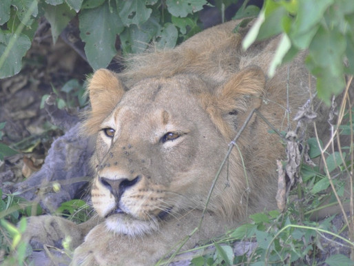 The Grand Plan, A Little Regret, and General Overview of our Safari on Nomad Africa