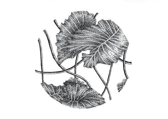 Vine Leaf Postcard