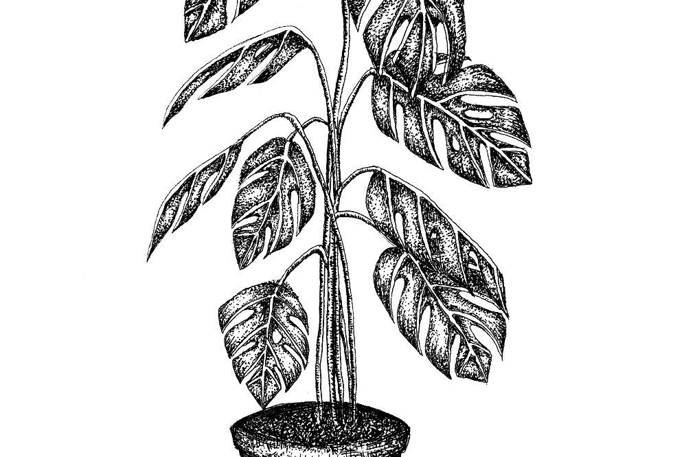 Cheese Plant A4 Print