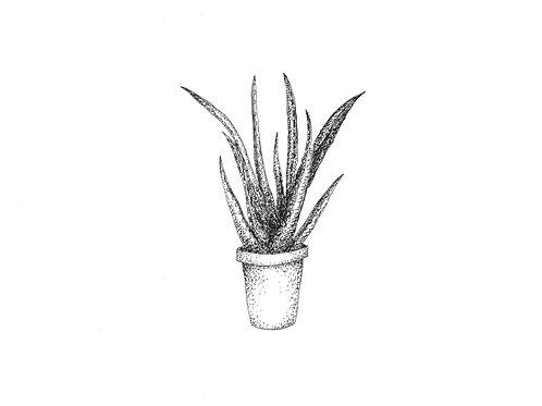 Aloe Aloe Postcard