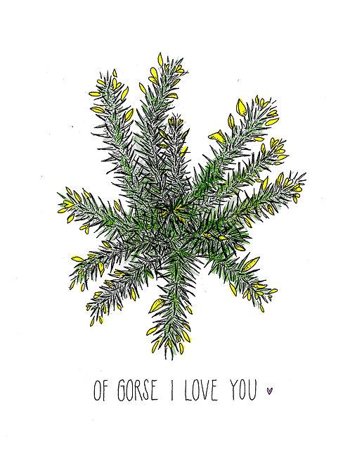 Of Gorse I Love You A4 Print