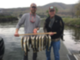 Limit of Walleye on the Columbia River