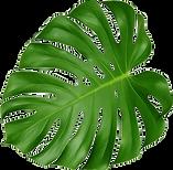 NicePng_tropical-leaf-png_1508077.png