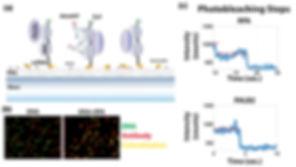 Single-molecule pulldown and photobleaching analysis
