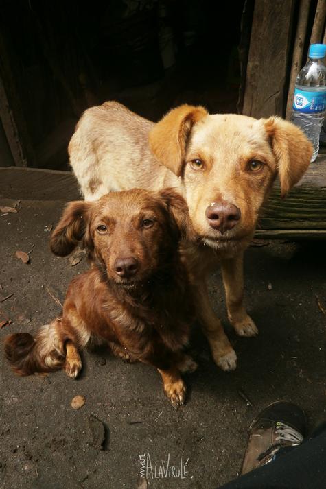 Amigos en el Camino- Andes, Perú