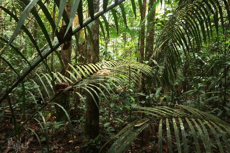 Vistas Selváticas- Amazonas, Brasil