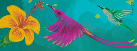 ilustración-Colibrí-mar alavirule
