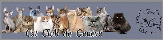Maine Coon Genève