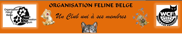 Maine Coon Fribourg - Estavayer - Bulle - Oron