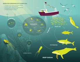 Plankton-Diagram3.png