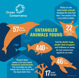 entangled-animals-infographic-ocean-cons