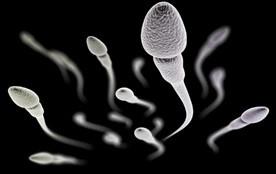 Tratamiento de infertilidad con células madre de espermatozoides