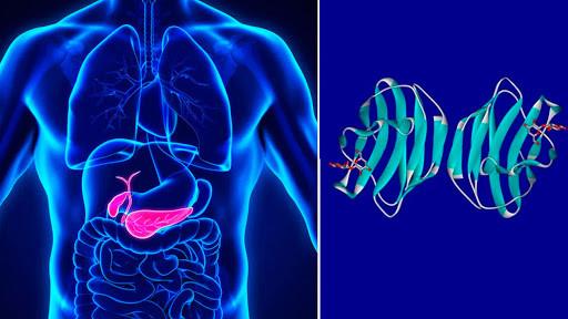 Desarrollo de sepsis y proteína Gal-1