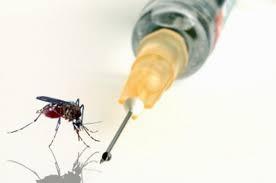 Alta eficacia de vacuna contra el paludismo
