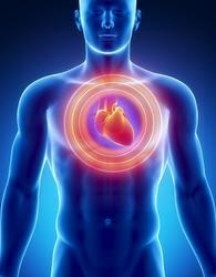 Exceso de grasa abdominal factor de riesgo Cardiovascular