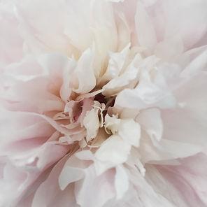 white flower .jpg