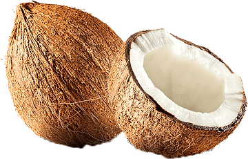 Coconut-PNG-File-Download-Free_edited_ed