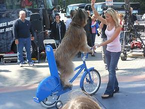 norm bike 2.jpg