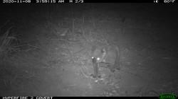 Infrared camera - koala