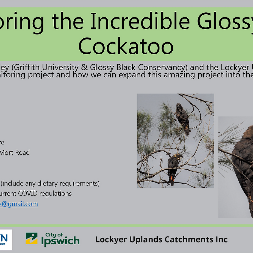 Monitoring the Incredible Glossy Black Cockatoo within the LLR!