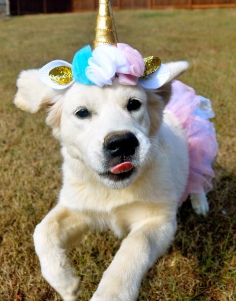 Jane puppy.jpeg