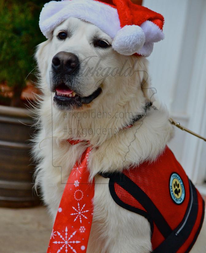 TITUS THERAPY DOG NURSING HOME