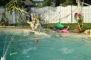golden retriever pool party arkgold