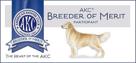 Arkgold Golden Retriever Dogs Arkansas