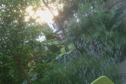 Dusk+at+le+jardin