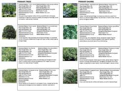 PLANT IMAGES 2