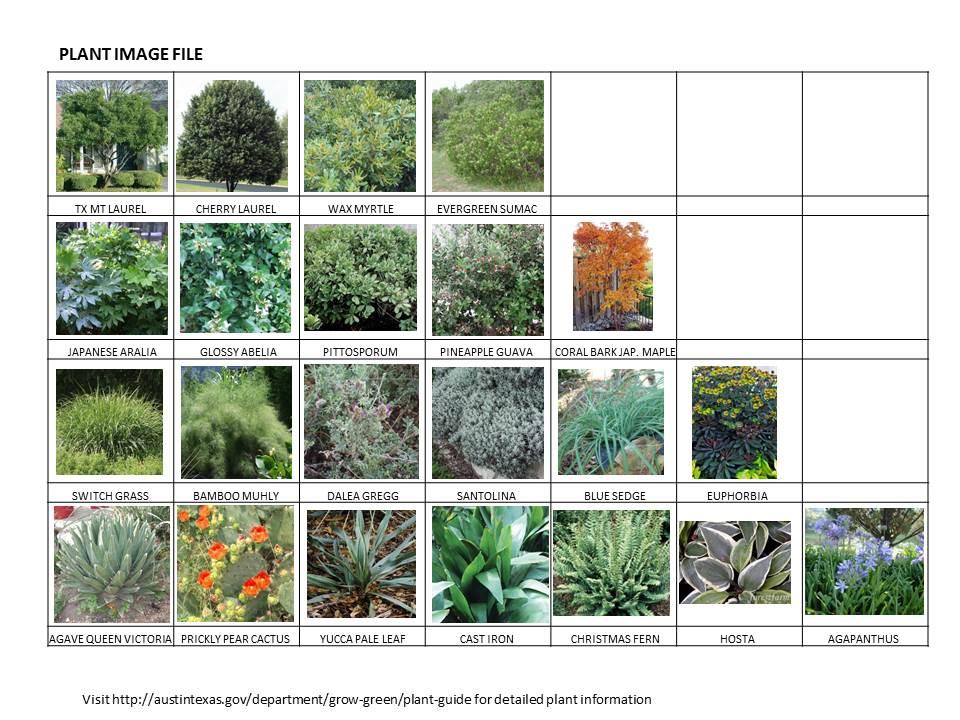 PLANT IMAGES 1