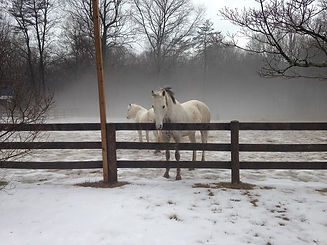 My beautiful boy in the mist with his be