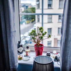10 Tips to Keep Plants Alive in a Small Space