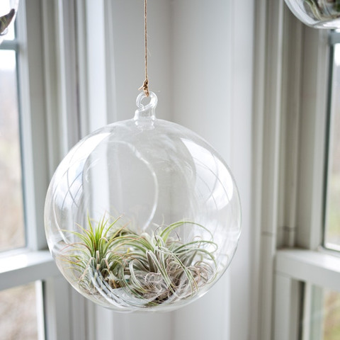 5 Easy Ways to Take Care of Air Plants
